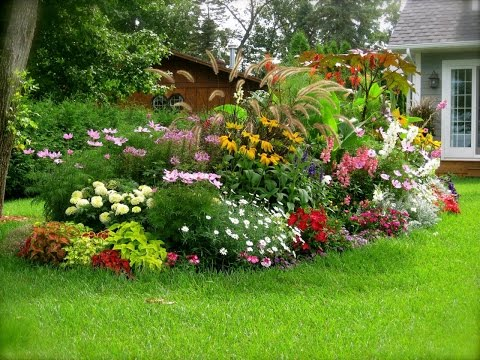 How to water your plants and flowers