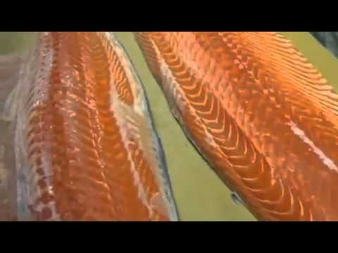 How To Fillet A Whole Salmon How To Make Sushi Series - How to Make Sushi Vinegar 2015