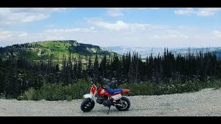 Barnfind 98 Honda Z50R tune up and first ride!!!