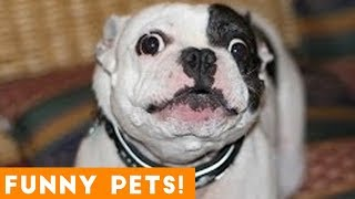 Funniest Pets & Animals of the Week Compilation April 2018   Hilarious Try Not to Laugh Animals Fail
