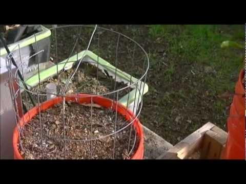 Catproofing My Bucket Garden