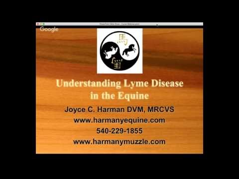 Lyme Disease in the Equine, Part I