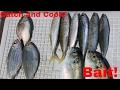 Catch and cook: Sabiki! Pinfish, Cigar Minnow, Speedo, Hardtail, Scaled Sardine