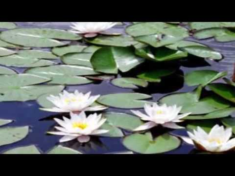 Awesome Pond Plants For Your Dream Water Garden