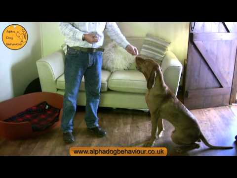 Clicker Training. An introduction by Nick Jones MA of Alpha Dog Behaviour Ltd