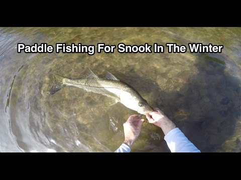 Fun Snook Fishing In Tiny Creek During The Winter (via Paddle Board)