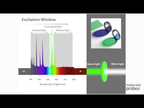 Molecular Probes Tutorial Series—Overview of  Filters and Light Sources
