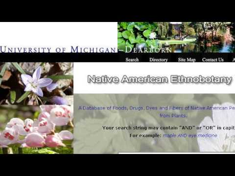 Native American Plants For Dyes