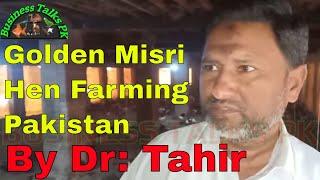 Golden Misri Hen Farming in Pakistan/Golden Misri Egg Farm