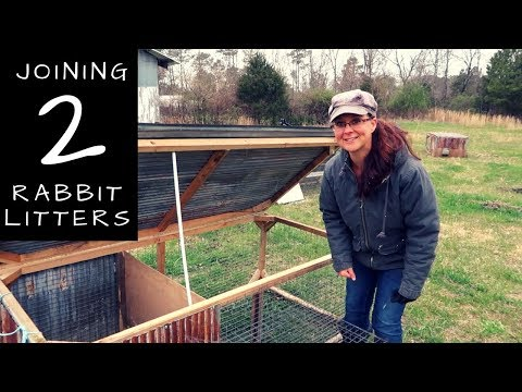 Can You Combine Rabbit Litters into a Rabbit Tractor?  Meat Rabbit Q&A