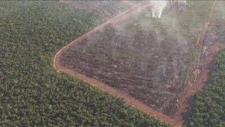 Amazzonia, deforestazione senza limite: 2000 alberi al minuto