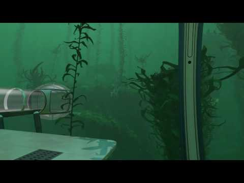 Subnautica   Kelp Forest With Stalkers Ambient   Observations on Planet