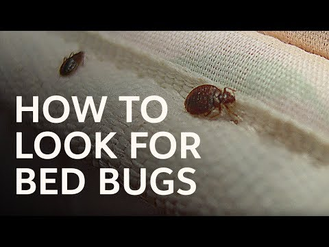 Zach Hotel Hack #5. How to Look for Bed Bugs
