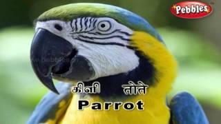 Tamil Birds for Preschool Videos - 9tube tv