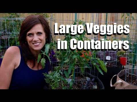Growing Large Vegetables/Fruits in Containers  #1- Tips for Success