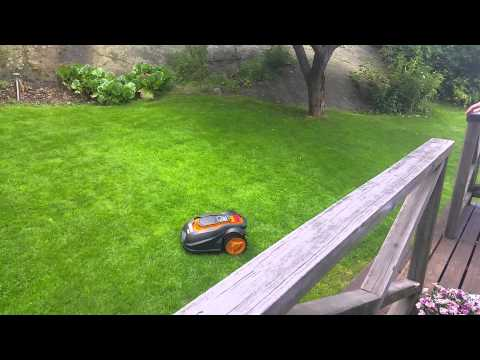 Lawn mower attacks pooping dog
