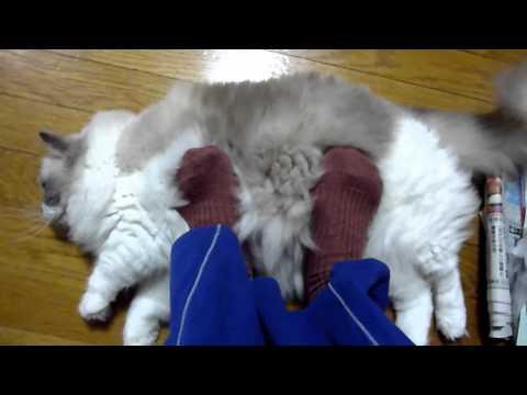 猫型フットウォーマー  Foot warmer ( cat model)