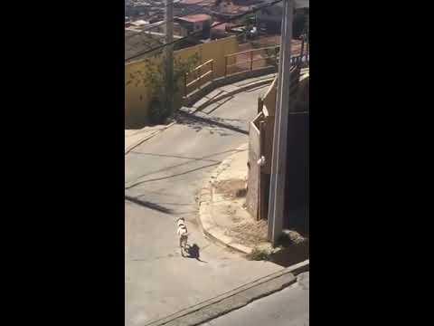 Dog Jumps Over High Wall - 989124