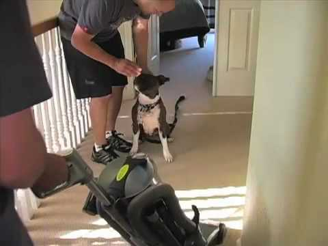 Dog Training: Training Your Dog to Not Be Afraid of the Vacuum Cleaner - Thriving Canine