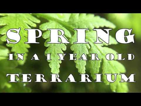 Spring in a 1 Year Old Terrarium