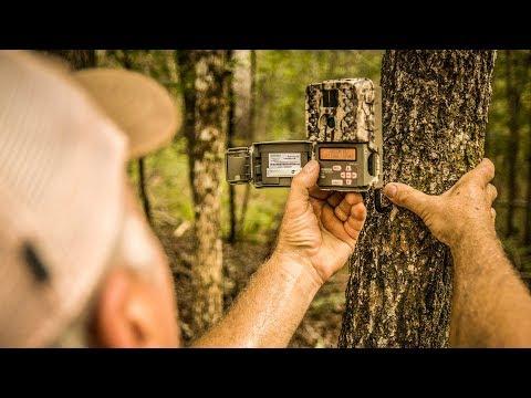 Trail Camera Surveys For Deer Pt. 2 - The Management Advantage