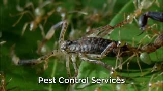 Download The Phoenix Bed Bug Exterminators (623) 235-0299 Video