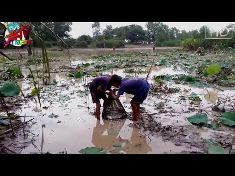 Amazing Net Fishing In Cambodia