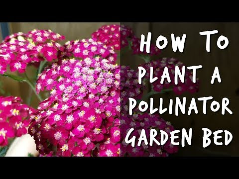 5 Plants for Pollinator And Butterfly Gardens 🦋🐝