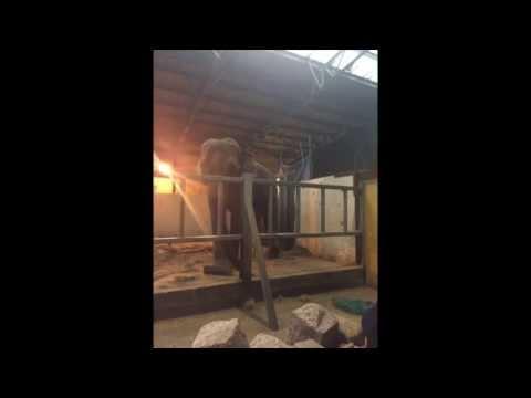 NWAFA visit Blackpool Zoo - May 2014