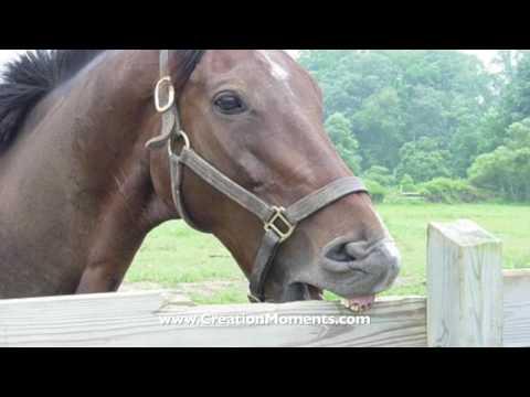 Horse Domestication