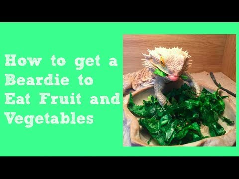 8 Tips For Getting Bearded Dragons to Eat Fruit & Vegetables