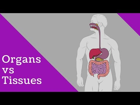 How many organs in human body? (Difference Organ and Tissue )