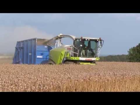 Poppy Harvesting