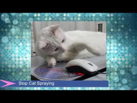 ░▒▓ Stop Cat Spraying ▓▒░