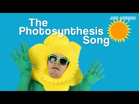THE PHOTOSYNTHESIS SONG
