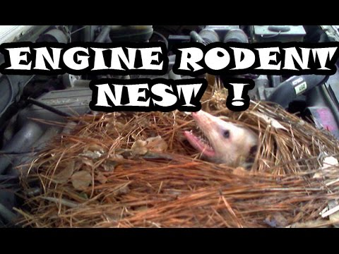 ENGINE RODENT NEST!!