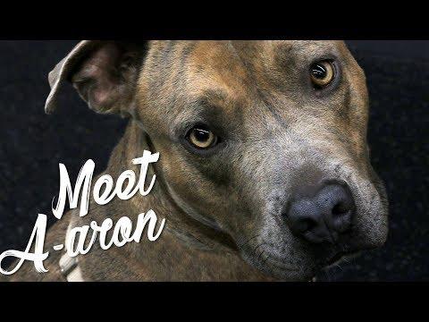 Meet A-aron