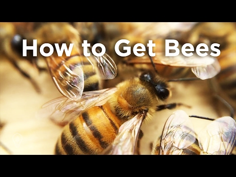How to Get Bees