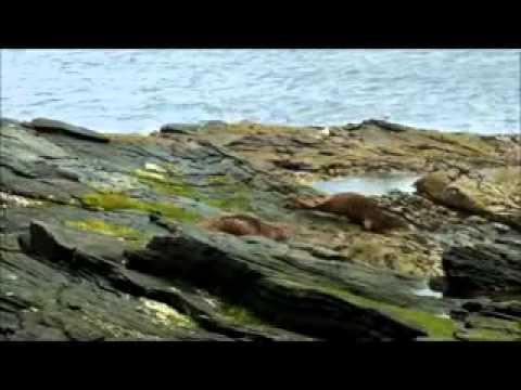 Lerwick Shetland Islands Scotland/Лервик Шетландские острова Шотлания
