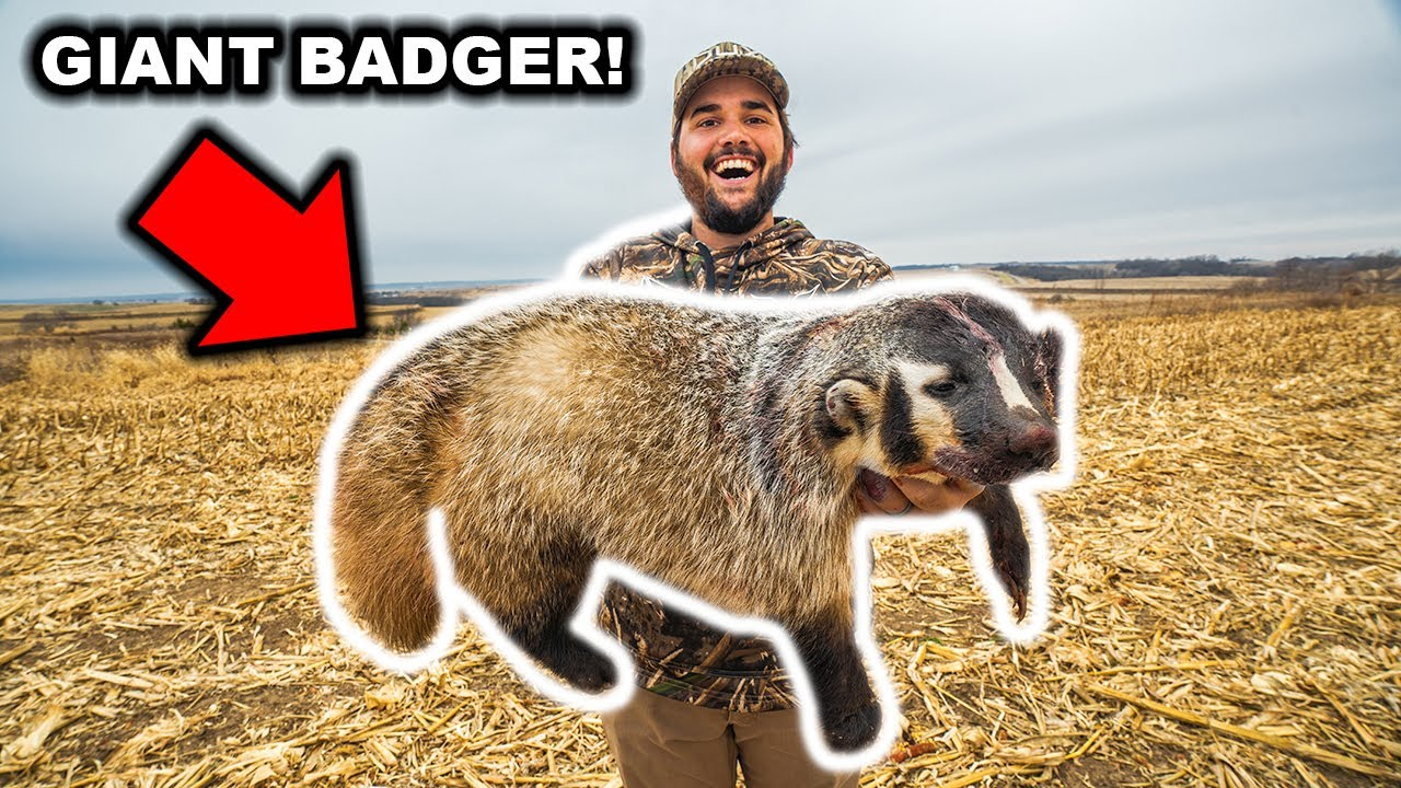I TRAPPED a RARE BADGER at My FARM!!! (CATCH CLEAN COOK)
