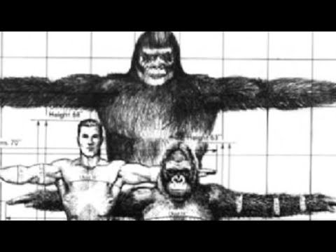 Why Melba Ketchum was Right about the DNA: Sasquatch is a Fellow Human Species