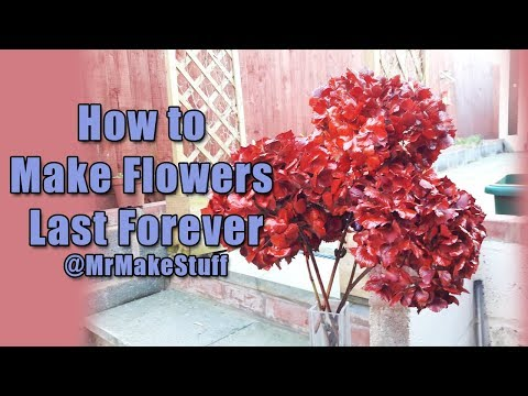 How to Keep Flowers Colourful Dry and Spray them