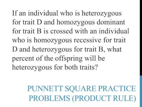 Punnett square practice problems (product rule)