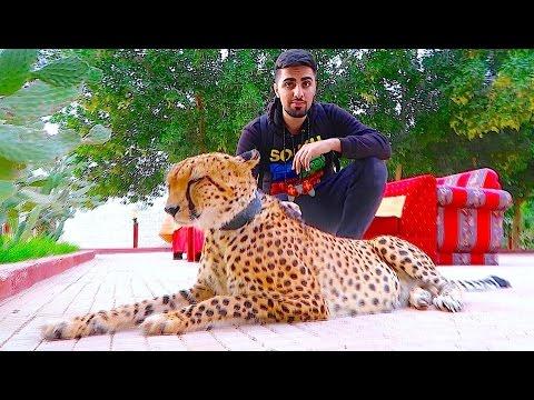 EXOTIC PETS OF DUBAI !!!