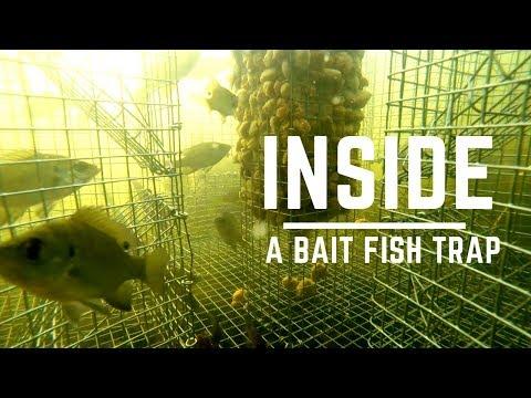 Inside a Bait Fish Trap (Bream / Perch / Sunfish /Pinfish)