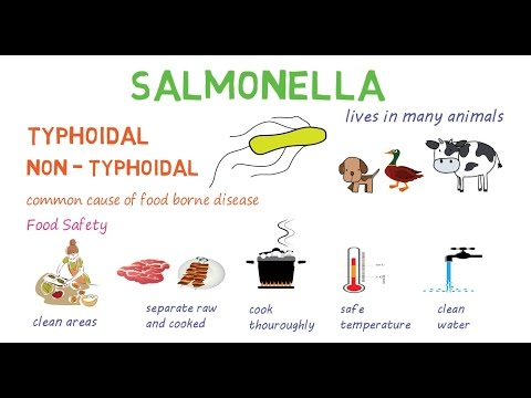 Salmonella - a quick introduction and overview