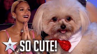 Unforgettable Audition: The CUTEST little pup shows off his best tricks! | Britain's Got Talent