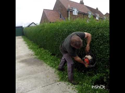 Hedge cutting / gardening