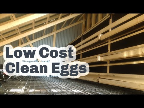 Rollaway roll out nest box clean eggs every day
