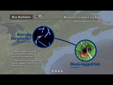 Science Bulletins: Biodiversity Lowers Lyme Risk